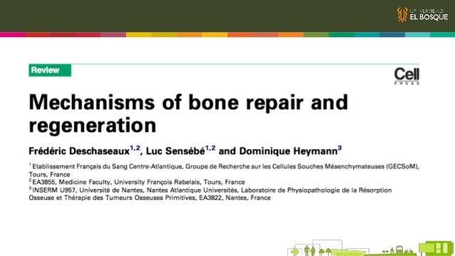 Generalidades Reparación ósea en adultos Embriogénesis Agentes Moleculares Principales PTH Wnt BMP Quinasas MSC´s Osteocla...