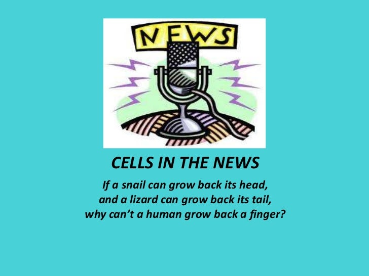 CELLS IN THE NEWS<br />If a snail can grow back its head,<br />and a lizard can grow back its tail,<br />why can't a human...