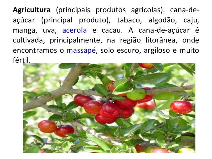 Agricultura  (principais produtos agrícolas): cana-de-açúcar (principal produto), tabaco, algodão, caju, manga, uva,  acer...