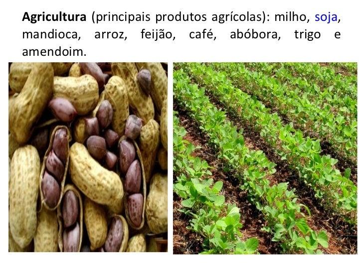 Agricultura  (principais produtos agrícolas): milho,  soja , mandioca, arroz, feijão, café, abóbora, trigo e amendoim.