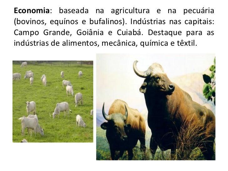Economia : baseada na agricultura e na pecuária (bovinos, equínos e bufalinos). Indústrias nas capitais: Campo Grande, Goi...