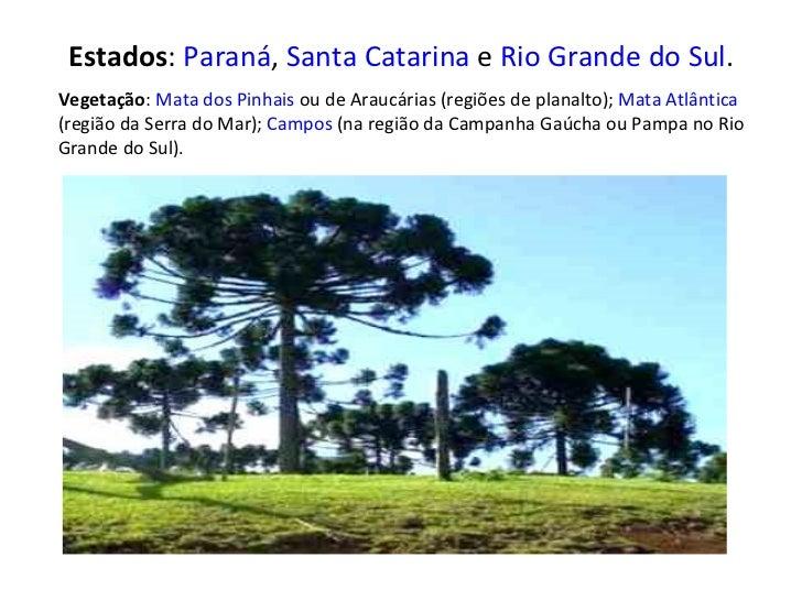 Estados :  Paraná ,  Santa Catarina  e  Rio Grande do Sul . Vegetação :  Mata dos Pinhais  ou de Araucárias (regiões de pl...