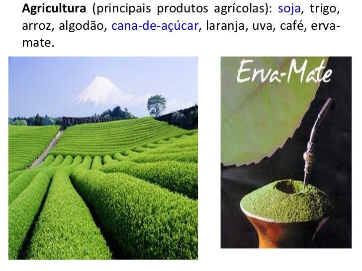Agricultura  (principais produtos agrícolas):  soja , trigo, arroz, algodão,  cana-de-açúcar , laranja, uva, café, erva-ma...