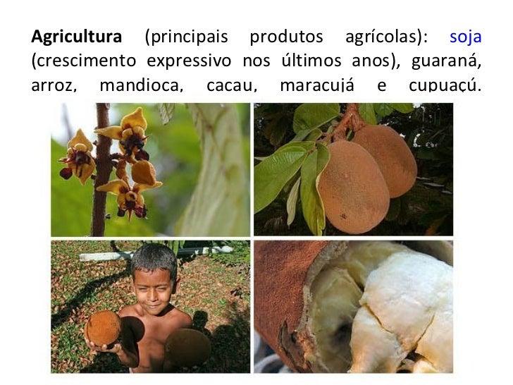 Agricultura  (principais produtos agrícolas):  soja  (crescimento expressivo nos últimos anos), guaraná, arroz, mandioca, ...