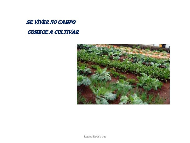 Se viver no campocomece a cultivar                    Regina Rodrigues