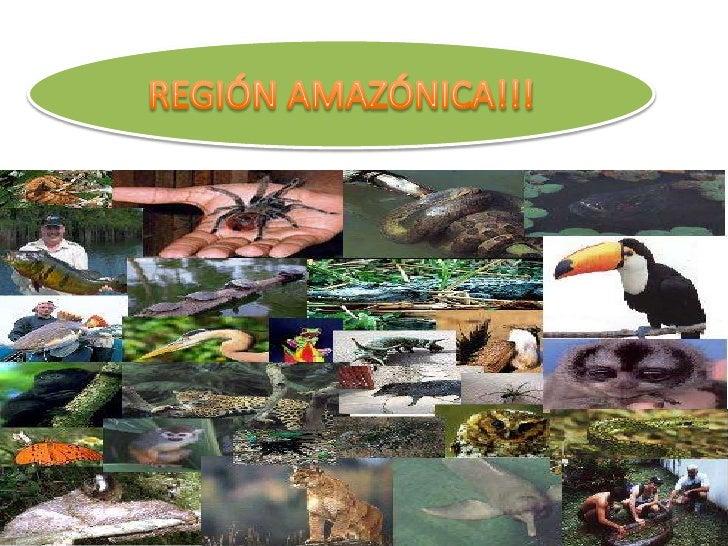 REGIÓN AMAZÓNICA!!!<br />