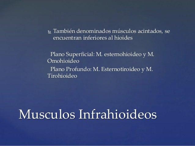 Region anteolateral del cuello for Esternohioideo y esternotiroideo