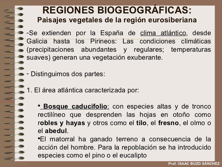 REGIONES BIOGEOGRÁFICAS: Paisajes vegetales de la región eurosiberiana <ul><li>Se extienden por la España de  clima atlánt...