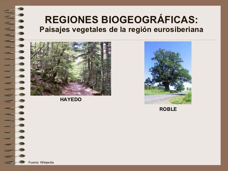 REGIONES BIOGEOGRÁFICAS: Paisajes vegetales de la región eurosiberiana HAYEDO ROBLE Fuente: Wikipedia