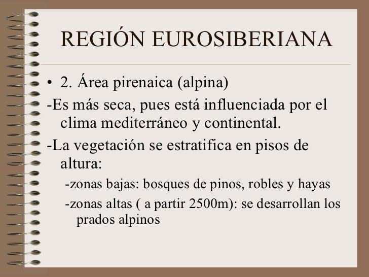 REGIÓN EUROSIBERIANA <ul><li>2. Área pirenaica (alpina) </li></ul><ul><li>-Es más seca, pues está influenciada por el clim...