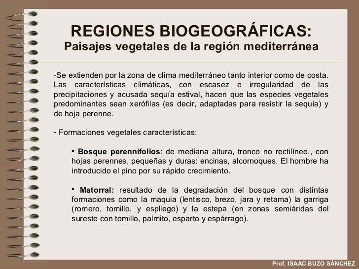 REGIONES BIOGEOGRÁFICAS: Paisajes vegetales de la región mediterránea <ul><li>Se extienden por la zona de clima mediterrán...