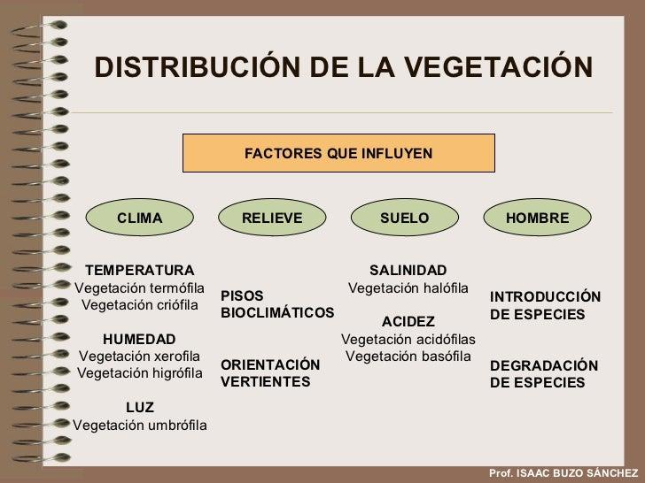 DISTRIBUCIÓN DE LA VEGETACIÓN Prof. ISAAC BUZO SÁNCHEZ FACTORES QUE INFLUYEN TEMPERATURA Vegetación termófila Vegetación c...