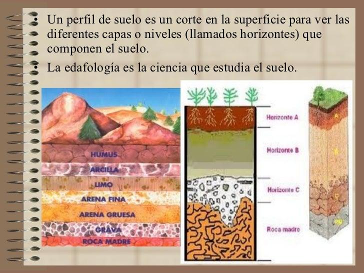 <ul><li>Un perfil de suelo es un corte en la superficie para ver las diferentes capas o niveles (llamados horizontes) que ...