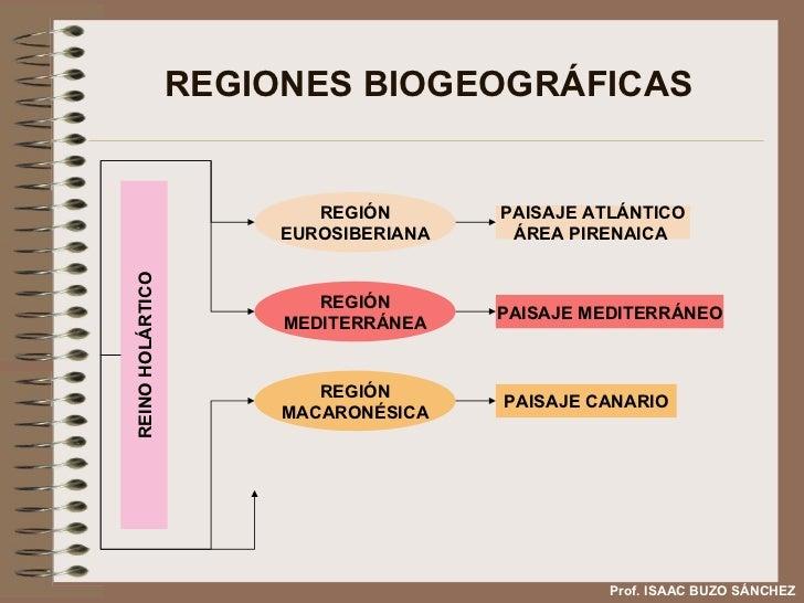 REGIONES BIOGEOGRÁFICAS Prof. ISAAC BUZO SÁNCHEZ REINO HOLÁRTICO REGIÓN EUROSIBERIANA REGIÓN MEDITERRÁNEA REGIÓN MACARONÉS...