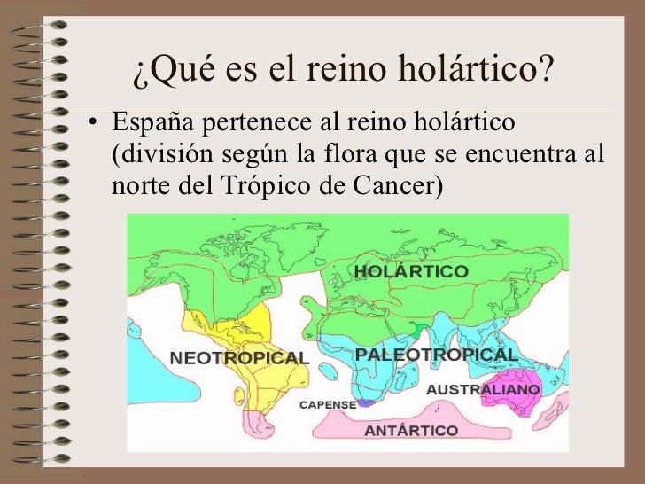 ¿Qué es el reino holártico? <ul><li>España pertenece al reino holártico (división según la flora que se encuentra al norte...