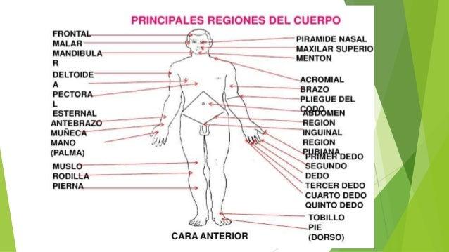 89 De Un Cuerpo Humano Las Piernas De Un Cuerpo Humano