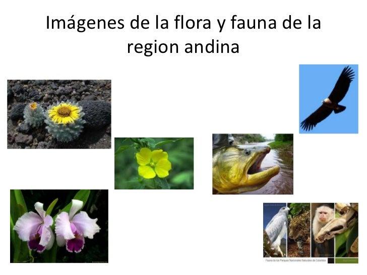 Regiones De Colombia 12019692 further Classification intro also Algunas Frases Sobre El Medio Ambiente Y La Naturaleza additionally El Aguila Superacion further Teoras Sobre El Origen De La Biodiversidad. on acerca de la biodiversidad