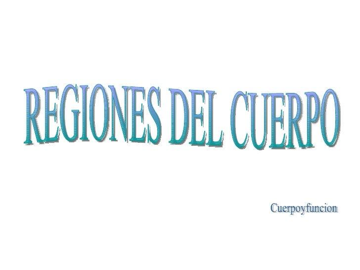 REGIONES DEL CUERPO Cuerpoyfuncion