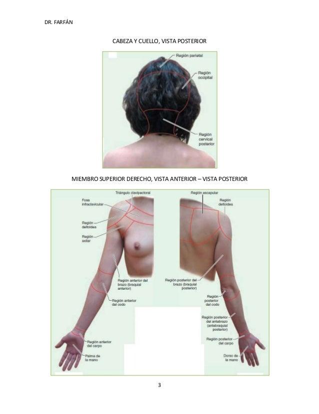 Regiones superficiales y profundas del cuerpo humano dr farfan