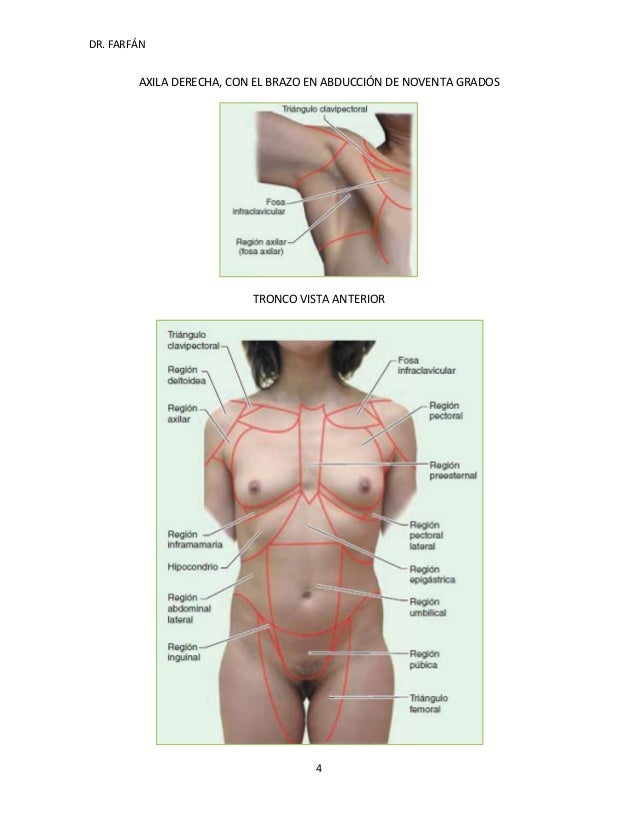 Asombroso Anatomía Humana Izquierda Del Abdomen Molde - Anatomía de ...