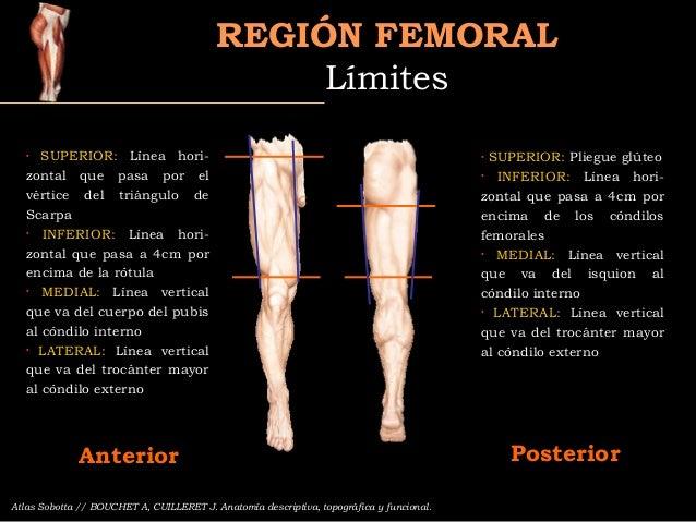 Region femoral Slide 3