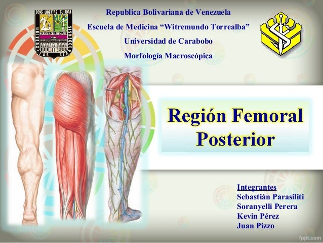 """Republica Bolivariana de Venezuela Escuela de Medicina """"Witremundo Torrealba"""" Universidad de Carabobo Morfología Macroscóp..."""