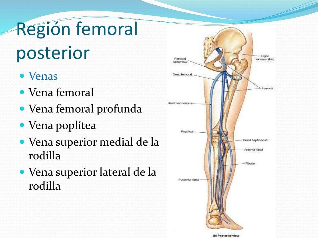Región femoral posterior y región glútea