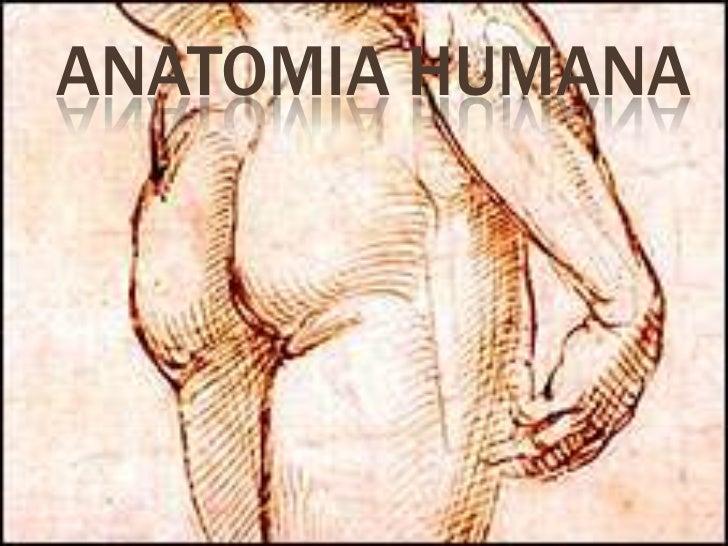 ANATOMIA HUMANA<br />
