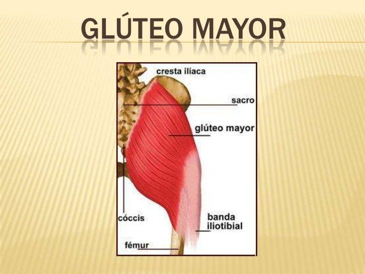 Contemporáneo Ubicación Del Glúteo Mayor Motivo - Anatomía de Las ...