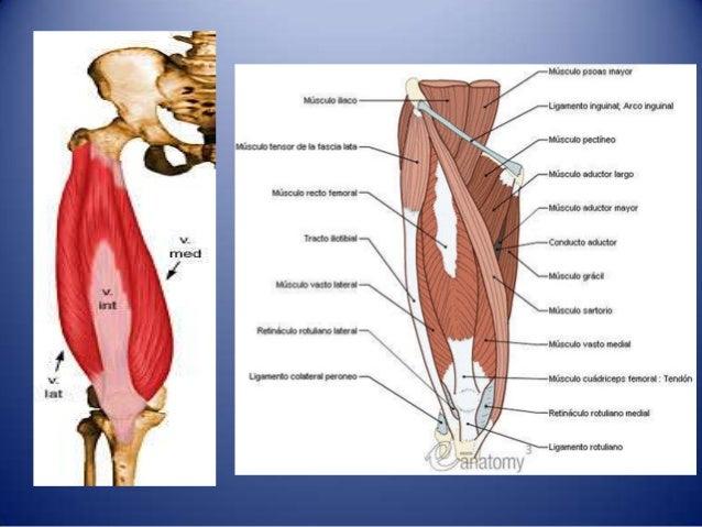 Region glutea, muslo anterior y posterior