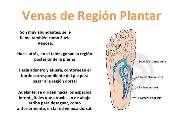 Las pastillas de varikoza de las venas en los pies las revocaciones