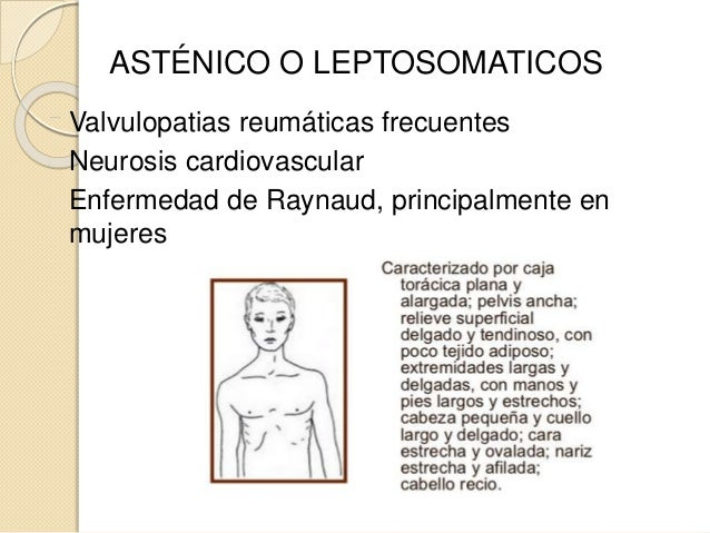 ASTÉNICO O LEPTOSOMATICOS Valvulopatias reumáticas frecuentes Neurosis cardiovascular Enfermedad de Raynaud, principalment...