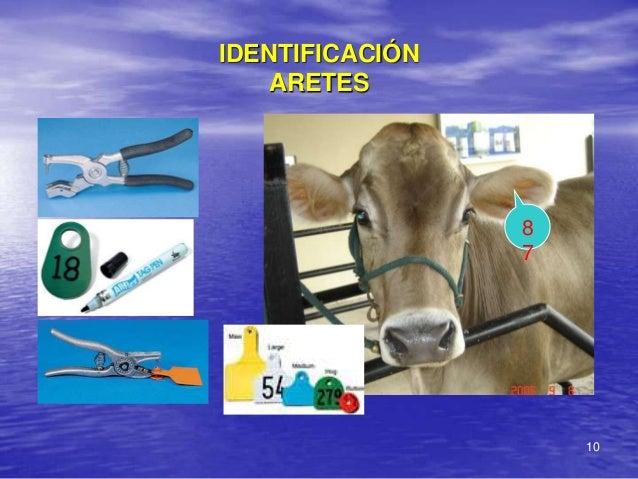 IDENTIFICACIÓN    ARETES                 8                 7                     10
