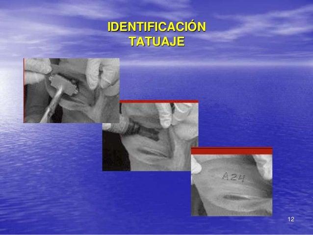 IDENTIFICACIÓN   TATUAJE                 12