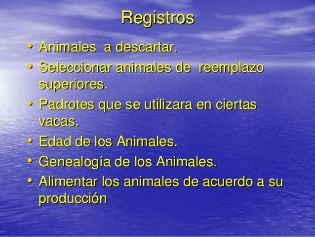 Registros• Animales a descartar.• Seleccionar animales de reemplazo    superiores.•   Padrotes que se utilizara en ciertas...