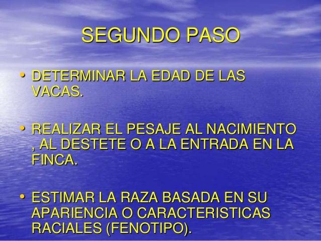 SEGUNDO PASO• DETERMINAR LA EDAD DE LAS VACAS.• REALIZAR EL PESAJE AL NACIMIENTO , AL DESTETE O A LA ENTRADA EN LA FINCA.•...