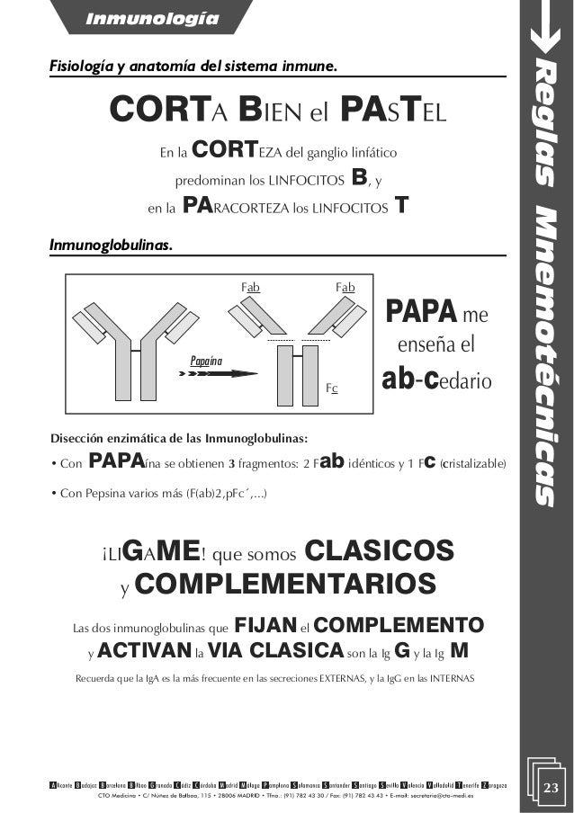 Hermosa Mnemotécnicos Anatomía Humana Cresta - Imágenes de Anatomía ...