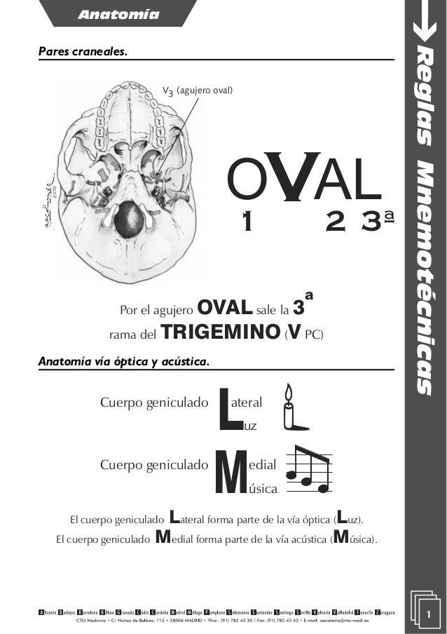 Excelente Mnemotécnicos Para La Anatomía Friso - Imágenes de ...