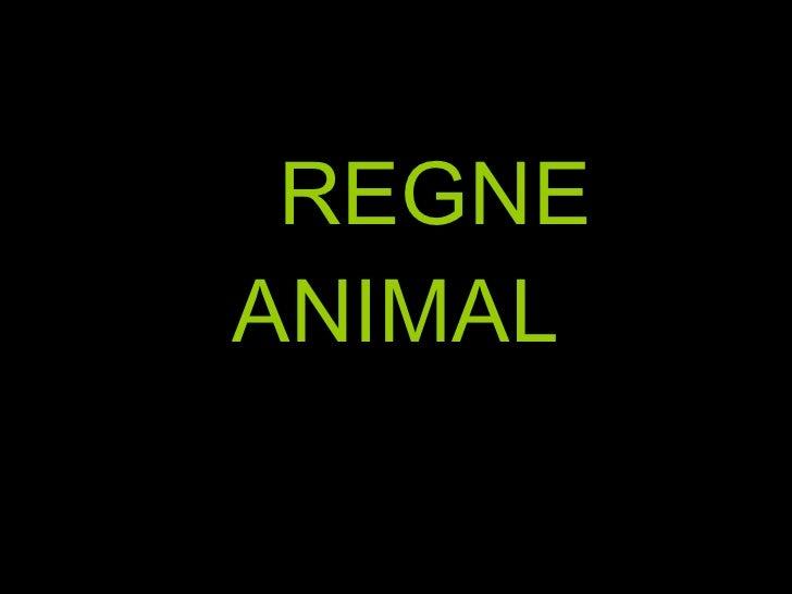 REGNE ANIMAL