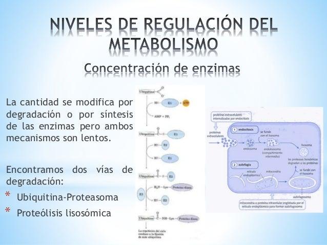 metabolismo microbiano se explica