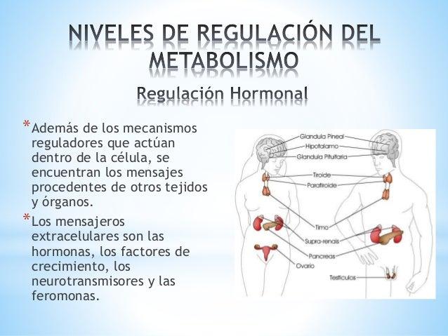 La apelación de Metabolismo basale