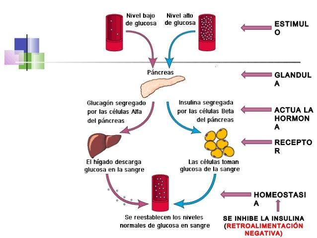 tipos de esteroides y su descripcion