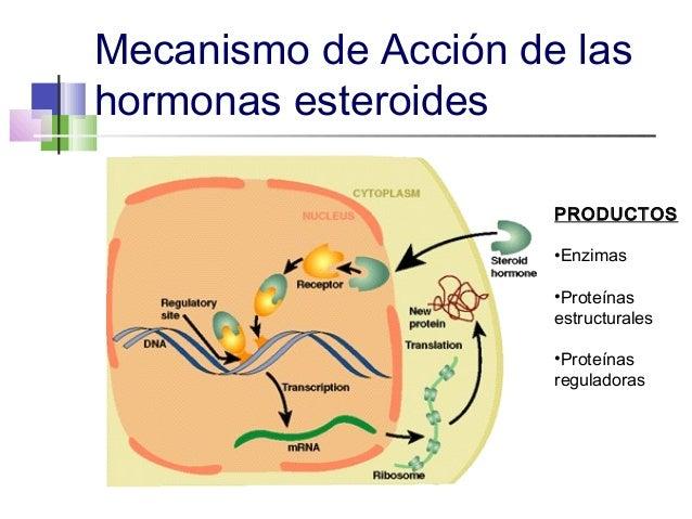 esteroides+mecanismo