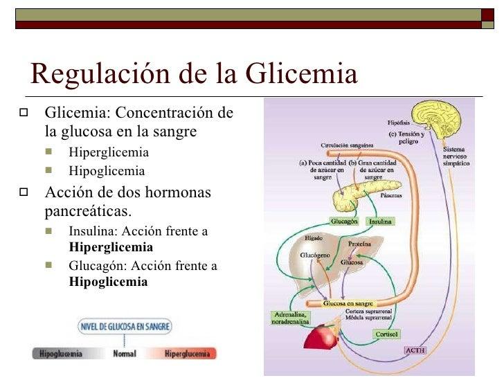 Regulación neuroendocrina de la homeostasis