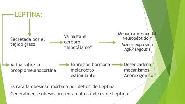 Regulación Neuroendocrina del Balance Energético
