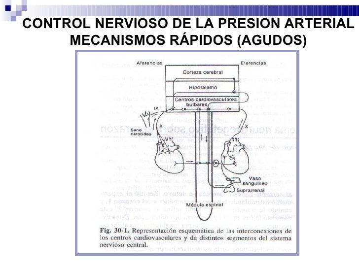Regulacion de la presion arterial 2012