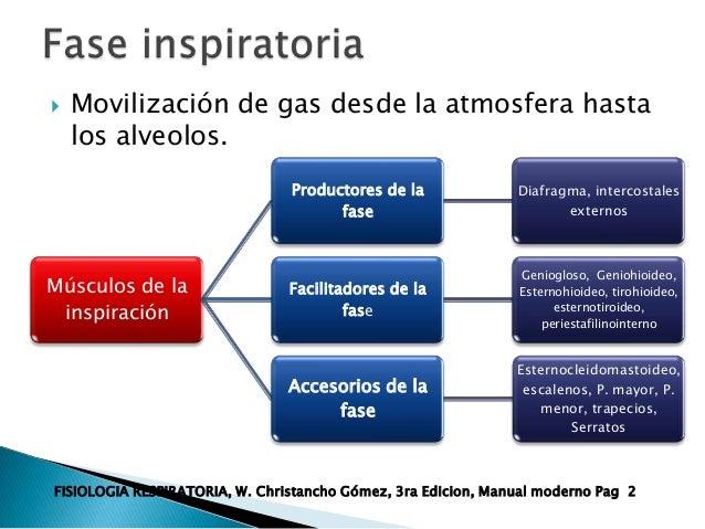 Regulacion de la respiracion for Esternohioideo y esternotiroideo