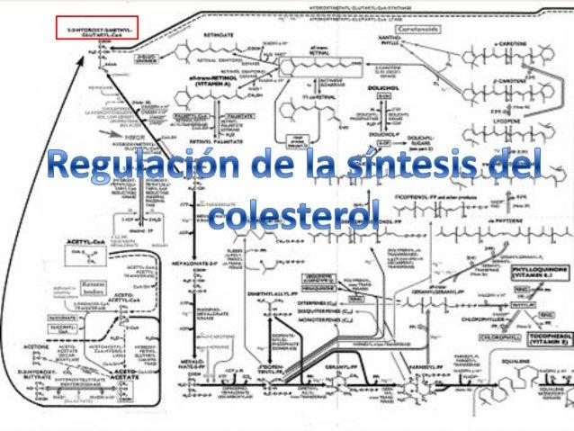 Índice 1. 2. 3. 4. 5. 6. 7.  ¿Qué es el colesterol? Funciones y localización del colesterol Fuente exógena El hígado y la ...