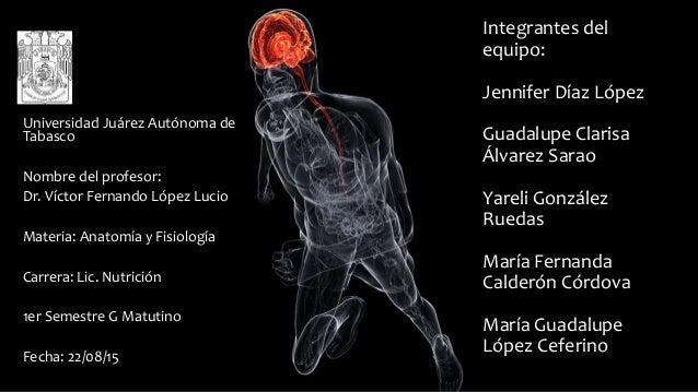 Regulacion y control de las distintas funciones corporales, medio int…