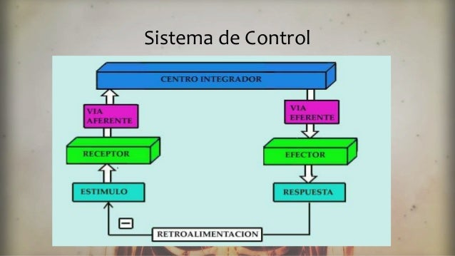 Regulacion y control de las distintas funciones corporales
